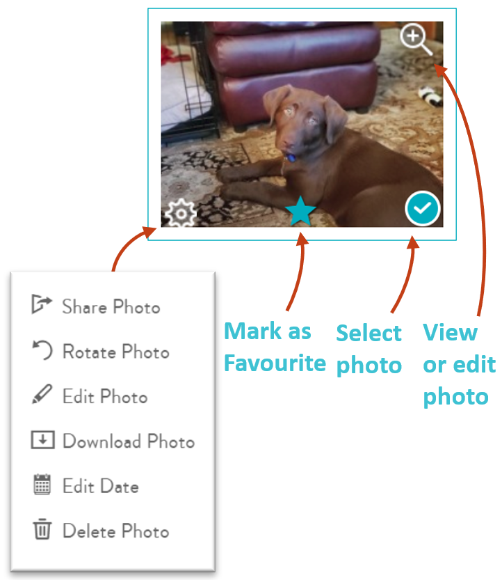 Mouse over a thumbnail to rotate, edit photo, download, edit date or delete a photo